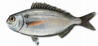 comprar pescado blanco