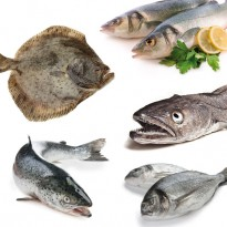 Pack 2 especial pescado